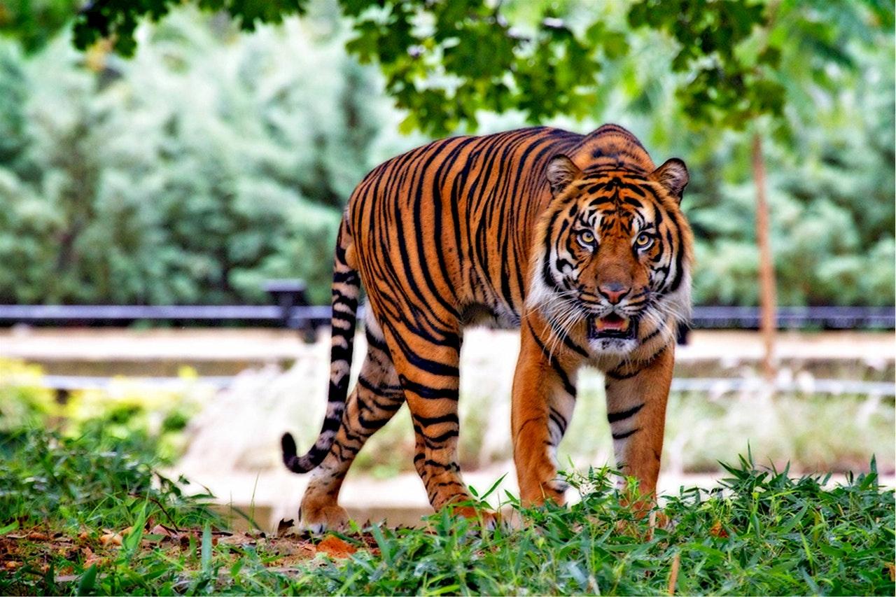 oeil de tigre bijoux